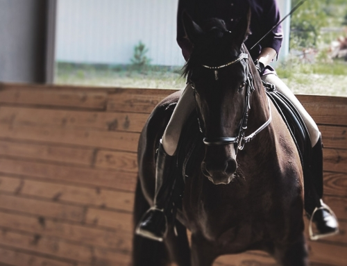 What Makes a Good Dressage Rider?