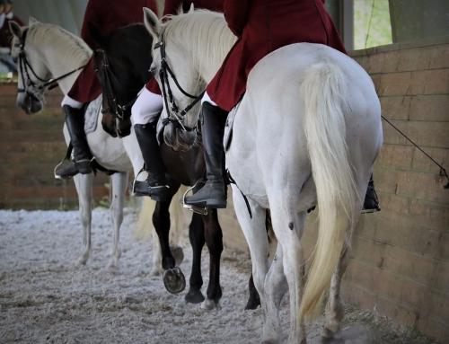 Expressions of Classical Horsemanship, Part 1: Riding