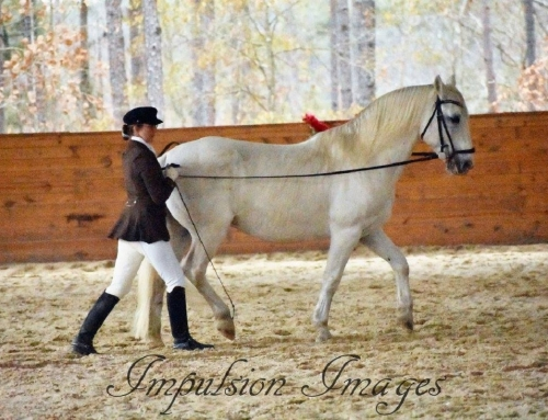 Expressions of Classical Horsemanship, Part 2: The Work In-Hand